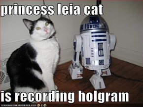 princess leia cat  is recording holgram