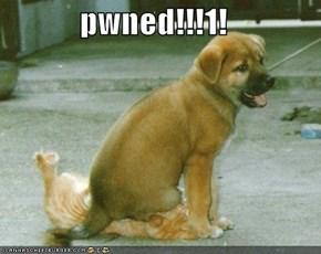 pwned!!!1!