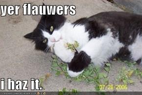 yer flauwers  i haz it.