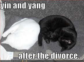 yin and yang  after the divorce.