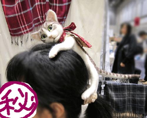 cat_headband