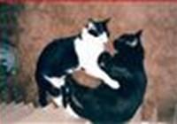 Tom_Cat