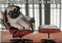 pugs-rock-lol