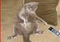 seimore11 avatar