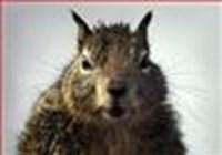 squirrel72