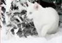 catgirl11