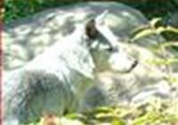 Wolfotter312