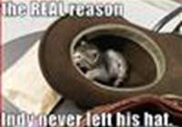 CatsWillTakeOver