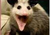 HelloPossum