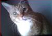 catgirl777