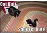 cat_butt_squirrel_butt avatar
