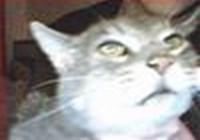 cheezycat