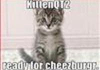 KittenQT2