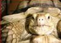 TurtleKisser71