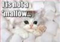 meowmeowmeow12
