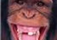 Monkeybarrel