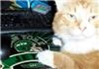 gato358