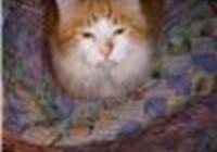 H_Kitty