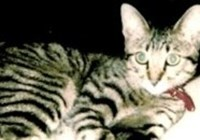 Philippa2 avatar
