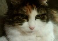 luvmy8catz avatar