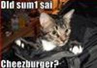 OMGcat