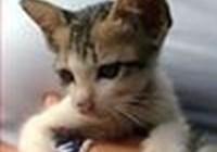 kittylover999