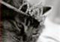 kimmy-cat