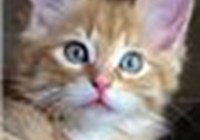 kittycat1234567