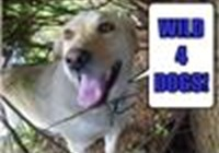 wild4dogs avatar