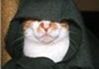 th_blackcat