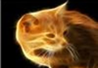 kittenkatte