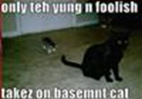 basement_cat1