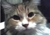 LuisaC avatar