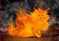 Flamecat