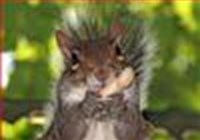cycosquirrel
