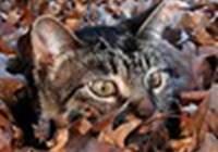 ladykatyjane