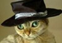 Booboo22 avatar