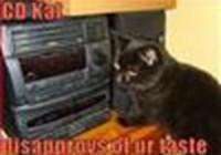 koolkat23567