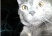 pixiethecat