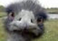 emu5088