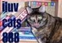 iluvcats888