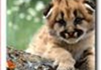 Kiri-kitty
