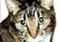 jcats avatar