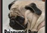 briarwoodpups