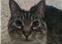 smokyzmom avatar