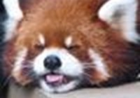 retard_panda