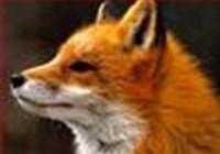 Icanhasfockses avatar