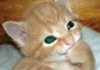 LilFurryOne avatar