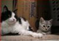 kittylvr77