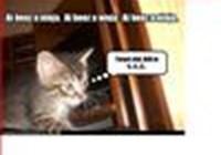 Catlover1